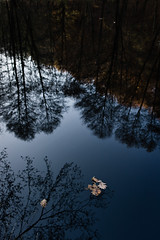 Herbstreflektion III (Andreas Strauch) Tags: blue autumn lake reflection water leaves see wasser herbst blau wald bltter reflektion weiher zeissbiogon35mm leicam9