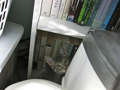 Image description: A gray tabby kitten hiding in a corner next to a bookcase