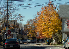 "maple near house • <a style=""font-size:0.8em;"" href=""http://www.flickr.com/photos/30765416@N06/6361226937/"" target=""_blank"">View on Flickr</a>"