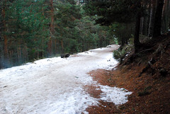 El camino (Lydia Natour) Tags: madrid espaa nieve montaa esqu parquenatural pealara lydianatour cotodepealara rutadenaturaleza