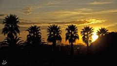 Ocaso en el Rinconin (Urugallu) Tags: parque españa sol canon contraluz spain flickr asturias palmeras cielo nubes gijon ocaso xixon asturies 50d elrinconin principadodeasturias urugallu olétusfotos mygearandme photographyforrecreation rememberthatmomentlevel1 rememberthatmomentlevel2