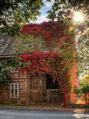 Scheune (composingfun) Tags: autumn house fall digital d50 laub herbst haus handheld bltter hdr wein