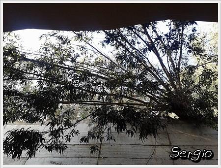Cae un árbol en el patio una vivienda de Jacinto Ruiz Mendoza