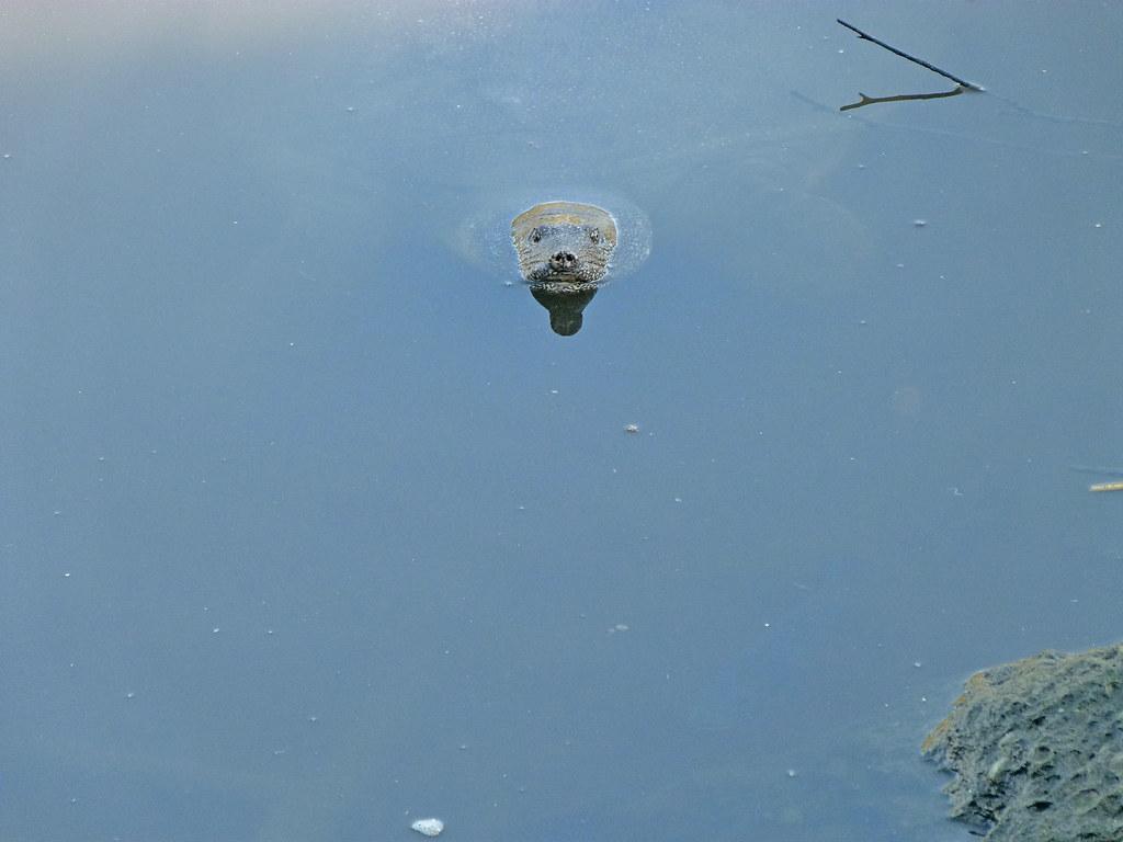 04-10-2011-turtle-hello