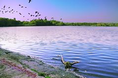Lake View (Muzammil (Moz)) Tags: ducks bluesky pound eastsussex moz fisheyelens copthorne canon60d muzammilhussain