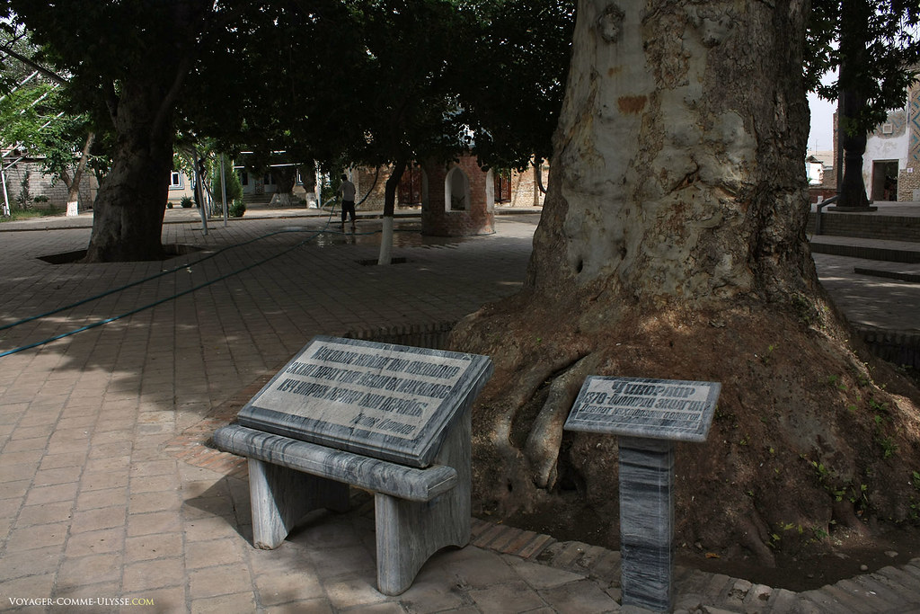 """Junto destes plátanos, que talvez foram conhecidos de Tamerlão, encontramos inscrições modernas em pedra mármore: """"as árvores plantadas por um homem santo estão sob a proteção de Deus""""."""