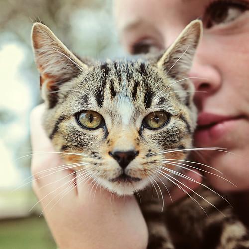 kitty_editA