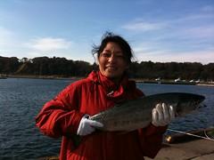鮭釣り終了。こんな鮭が釣れました、ではなくて、こちらはいただいた鮭。今度またチャレンジします。