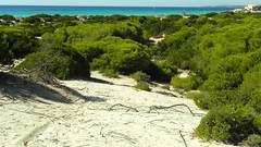 DSCN1685web (Toni_Darder) Tags: sea costa beach mar mediterraneo beaches playas sescovetes costamallorca playasmallorca paisajesmallorca