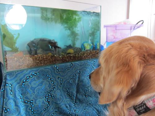 New fishies