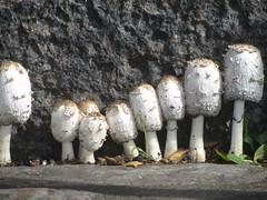cheerful mushrooms