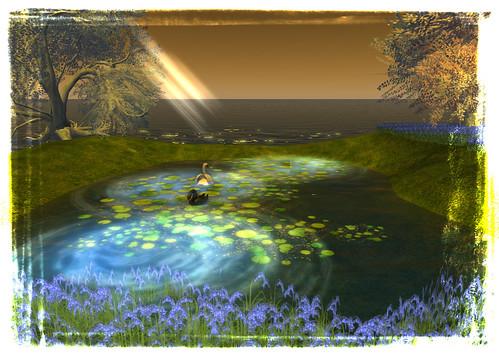 Seeadler - Swan pond