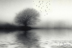 The Lake (Peter Solano. Pursuing a dream!) Tags: bw lake black tree water birds fog reflections grey waves explore fractalius