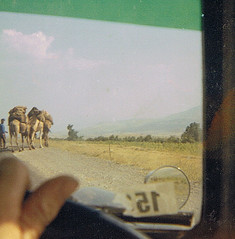 "Camels on the road • <a style=""font-size:0.8em;"" href=""http://www.flickr.com/photos/36398778@N08/6273352873/"" target=""_blank"">View on Flickr</a>"