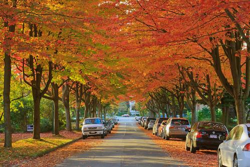 Autumn Color @ Vancouver by Chun@Vancouver