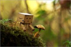 feeling lonely too? (Zino2009 (bob van den berg)) Tags: new autumn light sunlight color fall nature forest toy evening funny alone puppet walk sunday herfst single lonely friday shape wald picnik deventer danbo poppetje joppe latesun solitair zino2009 mushroompaddestoel bobphotography fridaydanboday