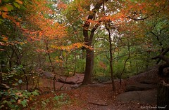 An Enchanted Forest (CVerwaal) Tags: nyc newyorkcity autumn trees newyork fall leaves analog fuji centralpark olympus ishootfilm oldschool olympusom1 fujisuperia theramble autumninnewyork zuiko24mmf28
