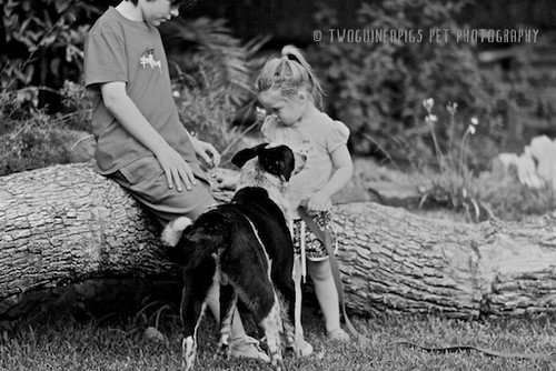 6. twoguineapigs-_MG_4051-bw-taylor+fosters by twoguineapigs pet photography