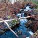 Martimoaapa / Little stream