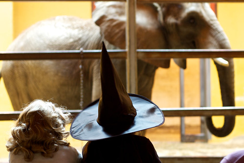 Witch gazing at the elephant.