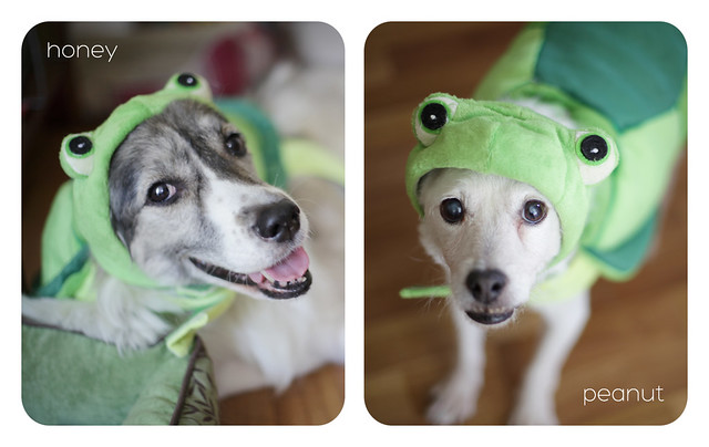 Happy Halloween from my lil' Turtle Doves!