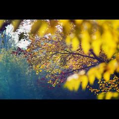 Day Two Hundred and Ninety-four (ODPictures Art Studio LTD - Hungary) Tags: autumn fall canon season eos hungary 85mm 365 magyar hungarian 2011 gödöllő ősz 60d orbandomonkoshu