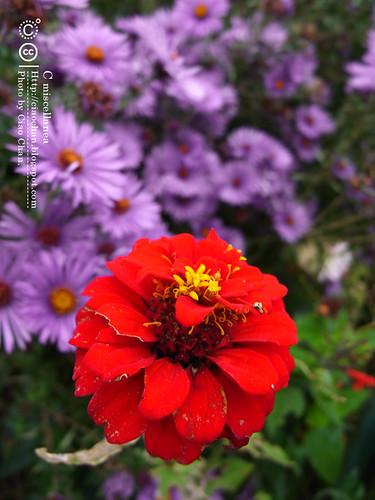 Bonjour Giverny~ 吉維尼 Jardins de Monet 莫內花園R1041412