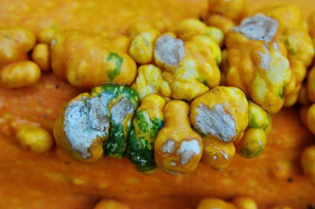 pumpkin spots