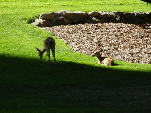 Lithia Park, Ashland, Oregon _ 6183