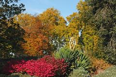 Autumn in Battersea Park-4-1 (johnaalex) Tags: autumn england london battersea d300 nikkor35mmf2d