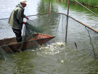 Aquaculture, China. Photo by He Qing Yunnan Officer, 2007