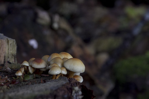 little cluster