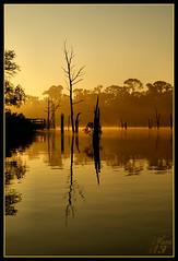 When the sun comes (WanaM3) Tags: park sun sunlight reflection silhouette sunrise golden texas explore bayou boardwalk pasadena daybreak moring naturesfinest bayareapark armandbayou wanam3
