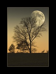 November Vollmond  (November full moon) (alfred.hausberger) Tags: november moon photoshop full vollmond updatecollection
