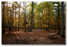 Pique-nique en fort (afer92 (on and off)) Tags: fall forest automne picnic novembre calvados fort caen 2011 bassenormandie 8727 grimbosq