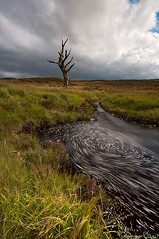 Vortix- Skeleton Tree , Rannoch Moor, Scotland (Tommaso Renzi) Tags: vortex tree rain skeleton scotland tommaso august glencoe moor rannoch renzi