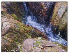 PASSAGGI (Carm) Tags: fiume mai bosco 2011 topis