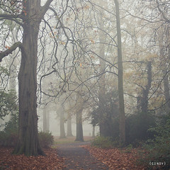 the mist ({cindy}) Tags: autumn trees mist holland netherlands leaves forest canon square woods bare branches