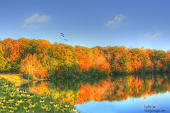 Fall Reflection (Vestige Images) Tags: trees lake colors virginia fallfoliage colonialparkway vestigeimages