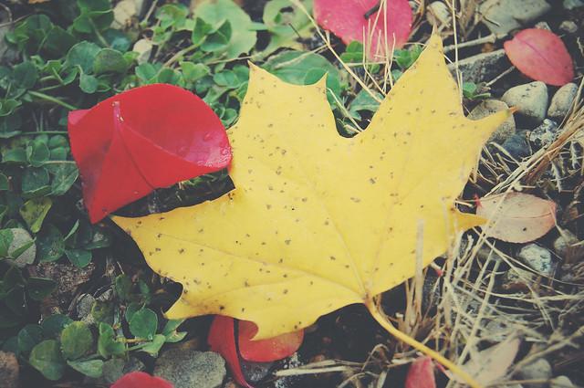 leaves_in back_6