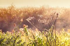 Nature (warmianaturalnie) Tags: nature field sunrise warmia