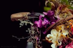 Spring Bouquet (skippys1229) Tags: flowers light bicycle canon spring lightandshadows shadows basket sidewalk handlebar bouquet 2012 ocala ocalafl ocalaflorida oilpaintingfilter downtownocala rebelt1i t1i canonrebelt1i ourdailychallenge odc3 cs6beta