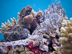 PNG_March_2012_143 (sebtron) Tags: canon png papuanewguinea alotau milnebay 400d nuakata