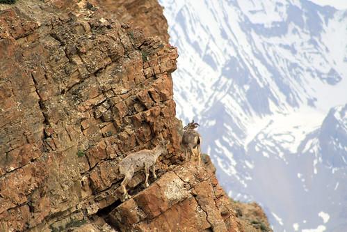 Inde - Himachal Pradesh - Kibber Alt 4000m by jmboyer