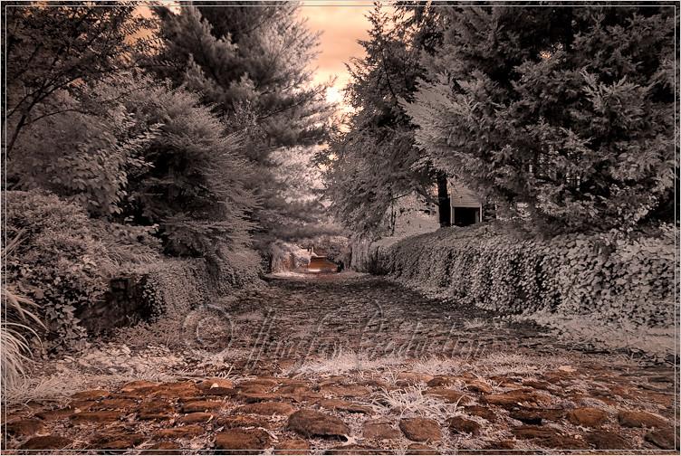 Kelby's 2011 Worldwide Photo Walk in Fredericksburg, Virginia - rocky lane  (infrared)