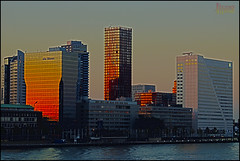 Rotterdam like Manhattan