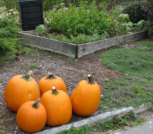 Foreground, pumpkins; background, Japanese indigo