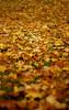 Autumn colours at Slottsbacken (Mack2) Tags: autumn red cold fall leaves yellow 1 leaf ground uppsala hillside 450 slope gul höst röd löv backe slottsbacken kallt uppsalaslott sonya100