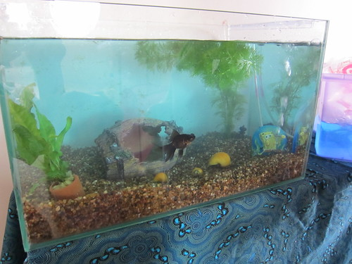 Clean fishtank with new fish & snails