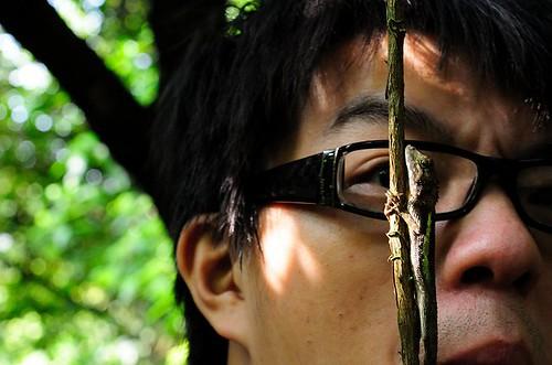 黃口攀蜥的雄蜥身體兩側可見黃綠色的縱紋,是台灣最小型的攀蜥種類。攝影:呂軍逸。